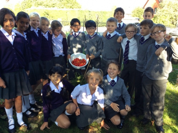 Year 5 harvest the fruits of their labours