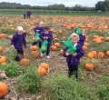 Pumpkin Picking and Harvest Celebrations in EYFS