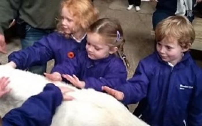 Reception Meet the Animals at Bocketts Farm