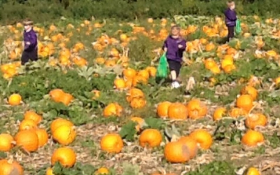 Reception pick pumpkins at Garsons Farm