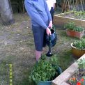 Green-fingered Year 4