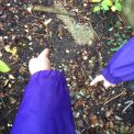 Year 1's School Grounds Nature Walk