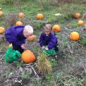 Pumpkin Picking and Harvest Celebrations in Early Years!