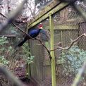 Year 2 visit Birdworld
