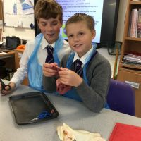 Year 6 enjoyed a hands on lesson learning about the anatomy of the heart